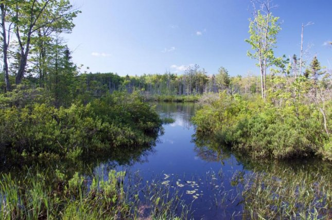 Scientists measured fossilized pollen in sediment sampled from the bottom of hundreds of North American lakes, including Little Pond, located in Royalston, Mass. Photo by David Foster