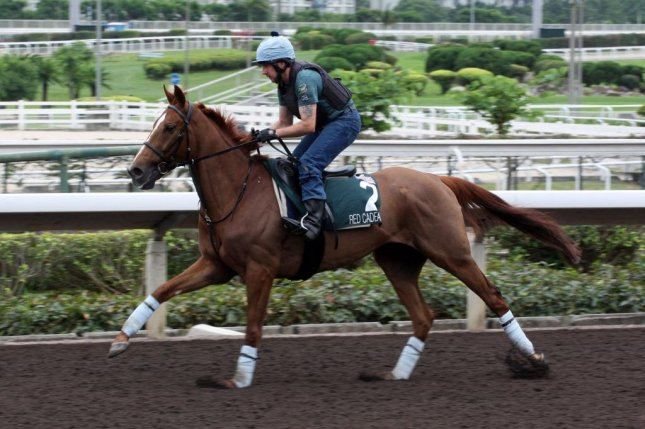 Red Cadeaux works for Sunday's Group 1 Audemars  Piguet QE II at Sha Tin in Hong Kong (HKJC photo)