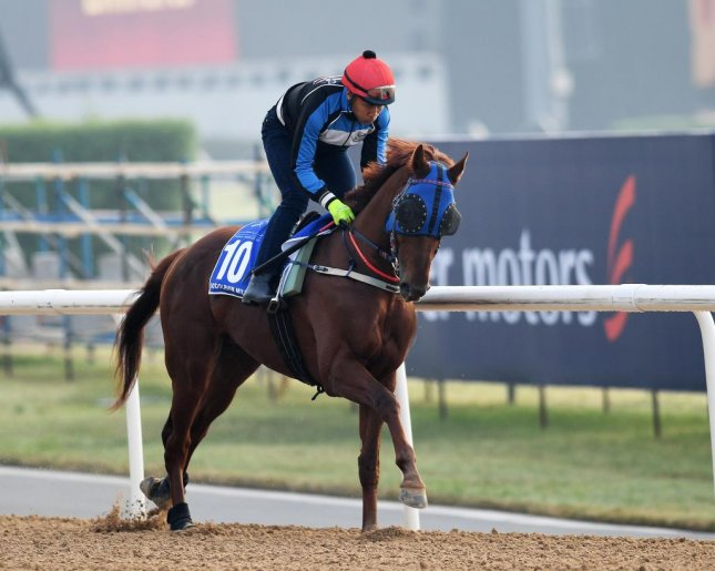 Triple Nine will be the first South Korean horse to compete on Dubai World Cup night when he starts in Saturday's Godolphin Mile. (Mathea Kelley/Dubai Racing Club)