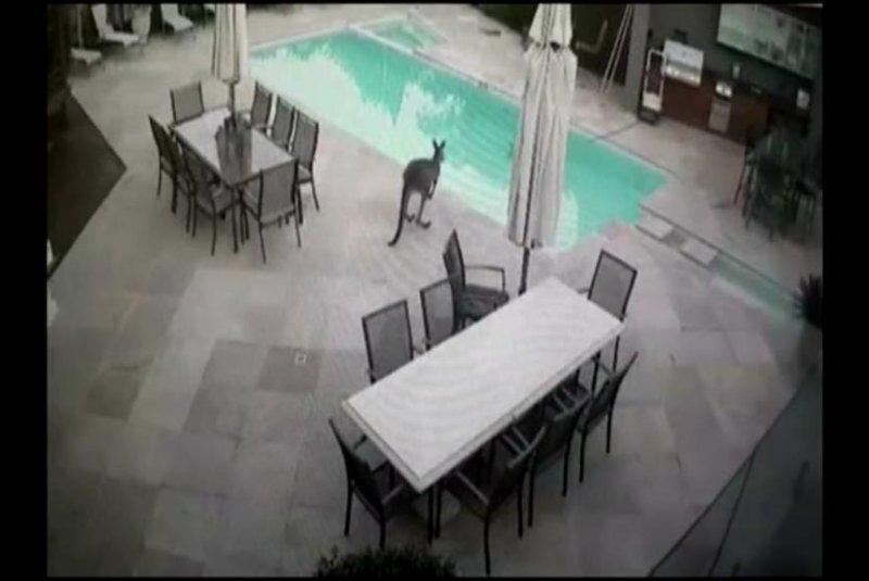 A kangaroo prepares to jump into an Australian family's backyard pool. WTXF-TV video screenshot