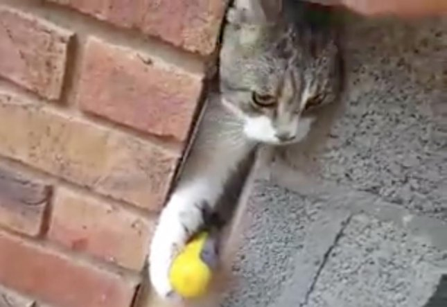 Campbell Baird, an engineer in Northern Ireland, drilled a hole to rescue a cat he found stuck between two walls outside his home.  Screen capture/Cromlyn House Veterinary Hospital and Clinic/Facebook
