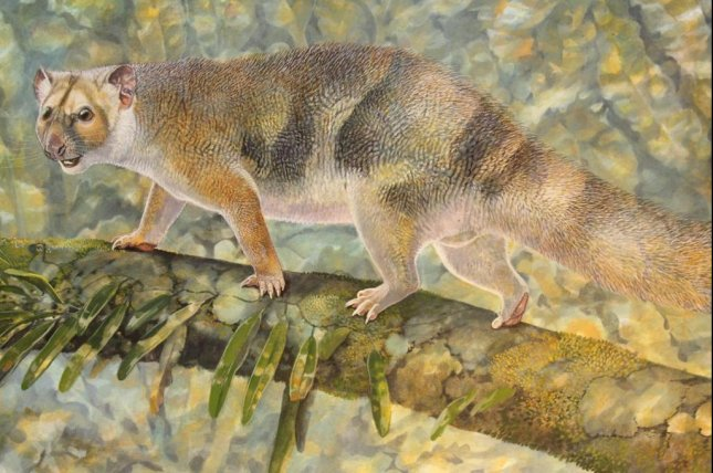 An artistic rendering shows the tiny marsupial lion in search of prey in the ancient rain forests of Australia. Photo by Peter Schouten/UNSW