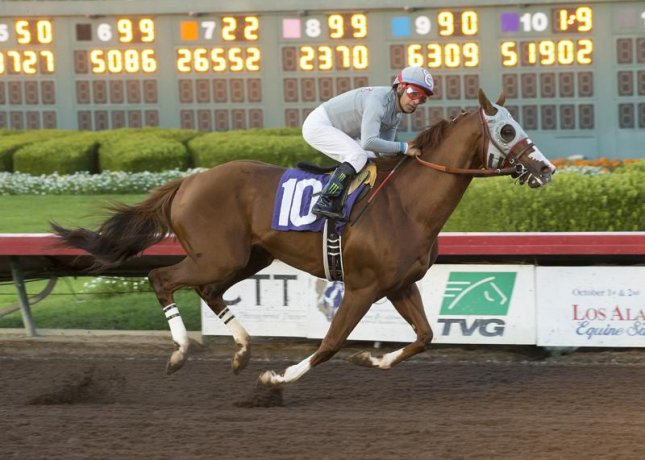 California Chrome romps in the Dec. 17 Winter Challenge in his final prep for the $12 million Pegasus World Cup. (Los Alamitos photo)