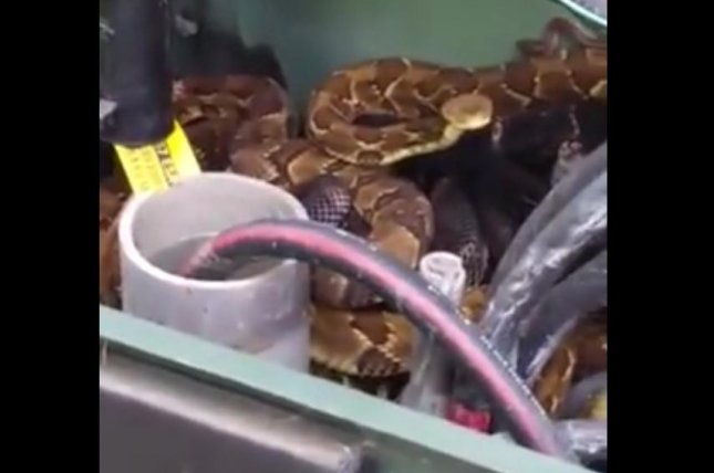 Watch  Electrical Transformer Box Hides Sleeping Snakes