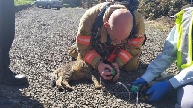Clackamas firefighters use the pet resuscitation device to revive an unconscious cat following a house fire in Oregon City. Photo courtesy Clackamas Fire District #1