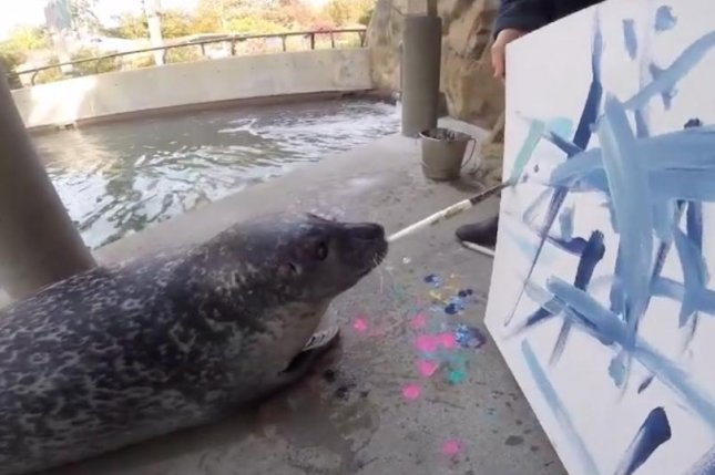 Blue one of Buttonwood Park Zoo's Harbor Seals works on a piece of art to be auctioned off at the zoo's Art Gone Wild event.  Photo by Buttonwood Park Zoo/Facebook