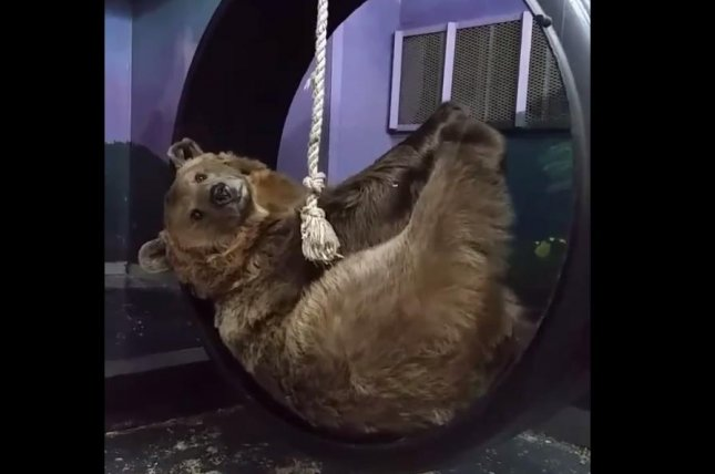 A Syrian brown bear poses for visitors to the Orphaned Wildlife Center in Otisville, N.Y. Screenshot: Kristy Connor/Facebook