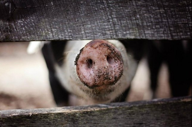Three lawsuits have been filed challenging the U.S. Department of Agriculture's new swine slaughter inspection system. Photo courtesy of Pixabay