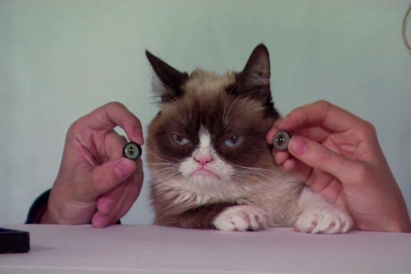 Grumpy Cat measured for Madame Tussauds animatronic