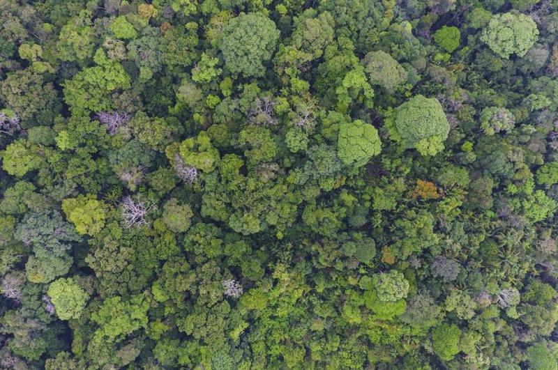 Old-growth forest on Barro Colorado Island, in Panama, hosts 300 tree species. Photo by Christian Ziegler/UT-Austin