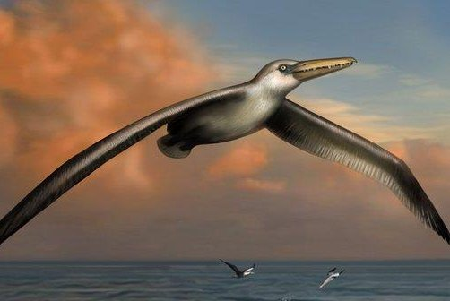 An artist's rendition of the largest bird to ever take the skies. (Liz Bradford)