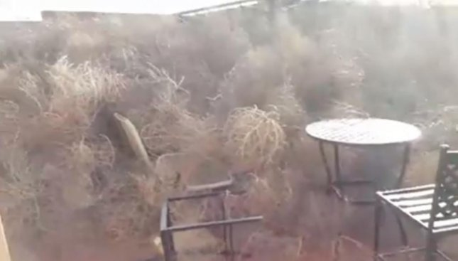 New Mexico Woman S Back Yard Filled With Tumbleweeds Upi Com