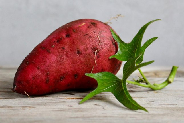 A Tennessee man harvested a 22.6-pound sweet potato that might be a new state record. Photo by LauraLisLT/Pixabay.com