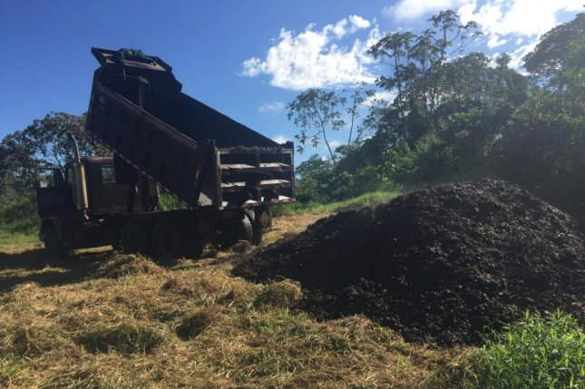 Researchers dumped a few dozen loads of coffee pulp, a coffee production byproduct, onto degraded forest land in Costa Rica -- the treatment dramatically boosted forest recovery. Photo byRebecca Cole