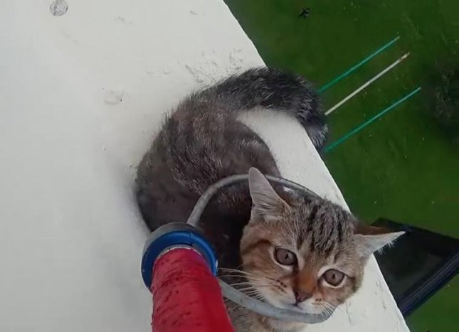 Rescue crews from SPCA Singapore helped save a kitten who became stuck on the 12th story of a local building. The frightened kitten attempted to dodge the rescue pole initially before being hoisted to safety. 