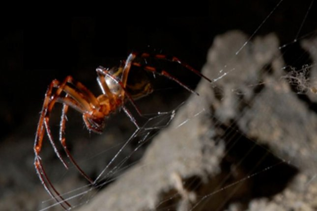 When researchers sprayed spiders with graphene solutions, the spiders ingested the nanomaterials and incorporated them into their silk. Photo by Graphene Flagship/EU