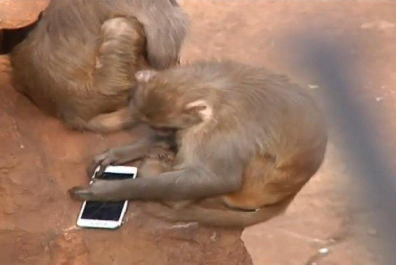 A monkey at a Chinese zoo just wants to check his Facebook. Screenshot: Newsflare