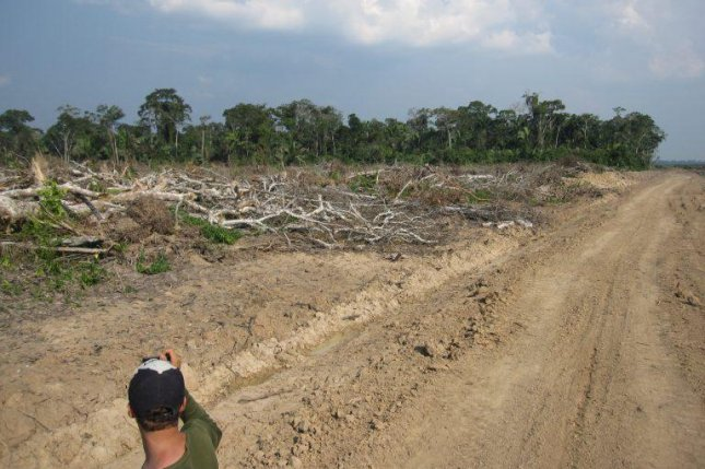Trees in the Peruvian Amazon are cleared to make way for an oil palm plantation. Photo by Kevin Krajick/Earth Institute