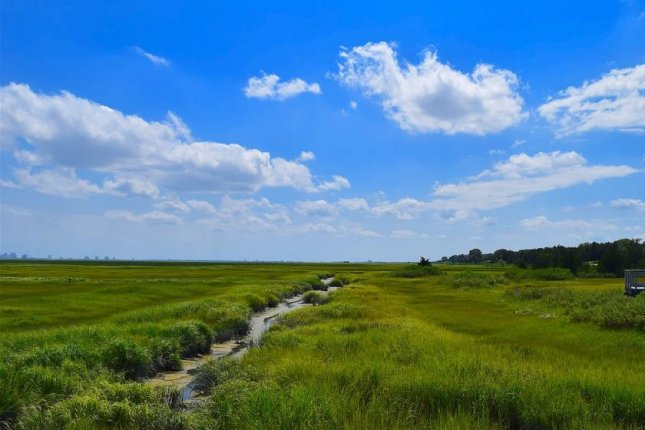 If allowed to grow, coastal wetlands can survive climate change, according to a new study. Photo by Pixabay/CC