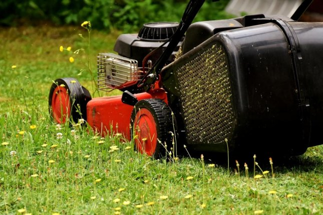 Lawns that were mowed more heavily were more likely to host pests, weeds and allergenic plants, according to a new study. Photo by Pixabay