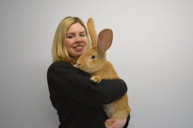 The Scottish SPCA is seeking a home for Atlas, a continental giant rabbit. Photo courtesy of the Scottish SPACE