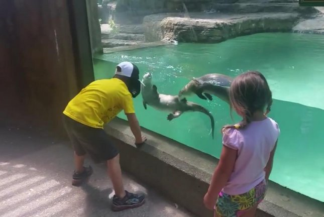 Otters filmed 'mimicking' young boy at Michigan zoo