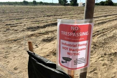 A hemp field near Fresno, Calif., is marked with a no trespassing sign that indicates the plant growing here is hemp, not marijuana. Photo courtesy of Fresno County Sheriff's Office