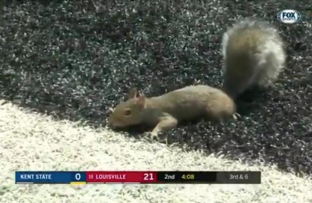 A speedy squirrel dashed across the field to score a touchdown during a college football game on Saturday. 
