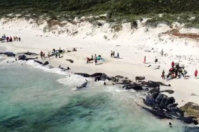 More than 150 whales stranded on Australian beach