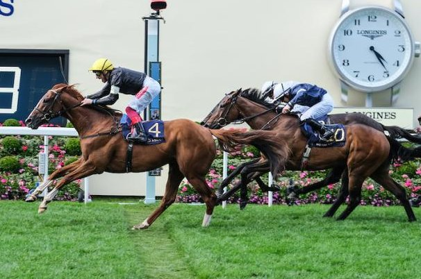 Stradivarius, shown winning the Gold Cup at Ascot, has landed his second straight 1 million pound stayers bonus with a win at the Ebor meeting at York in the North of England. Photo courtesy of Ascot Racecourse