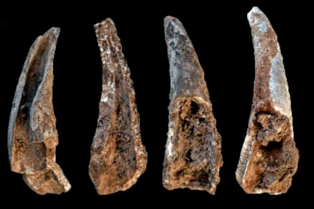 Scientists found evidence of Neanderthal seafood consumption, including cracked and burned crab legs, in a cave in Portugal. Photo by João Zilhão