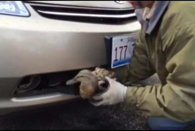 A duck is rescued from the front bumper grille of a Prius in Illinois. Screenshot: Animal Trackers Wildlife/Facebook video