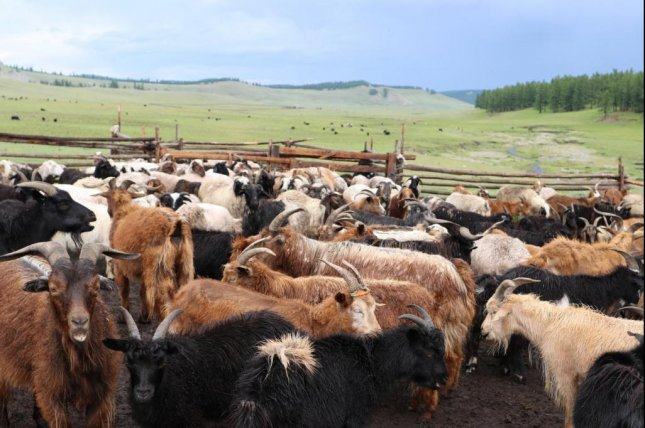 5,000-year-old milk proteins show dairy pastoralism's effect on Eurasian steppe