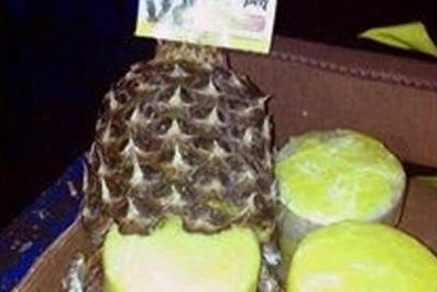 Pineapples served as containers to hide cocaine from Central America to Spain. Photo courtesy of Spain Interior Ministry