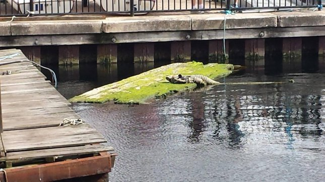 London's Dockness Monster isn't what it appears to be. Photo by The Docklands Sailing & Watersports Centre | DSWC London/Facebook