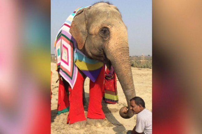 An elephant at an Indian sanctuary sports a colorful sweater. Screenshot: ABC News