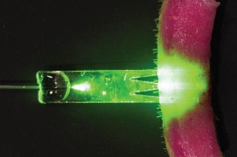 A new fiber-optics technology allows light to penetrate deeper into tissue to heal wounds. Photo by University of St. Andrews