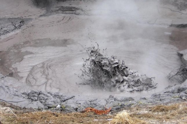 The archaea microbe Sulfolobus acidocaldarius thrives in hot springs and geothermal mud pools. Photo by Lancaster University