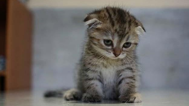 One of Buzzfeed's 12 Cats That Just Want To Be Left Alone. (Image Quickmeme.com via Buzzfeed)