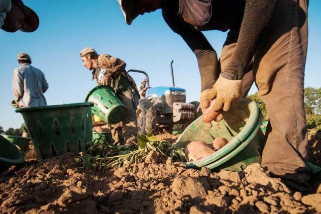 The U.S. Department of Labor is proposing changes to its H2-A program that it says will make it easier for farmers to import migrant labor. Photo courtesy of U.S. Department of Agriculture