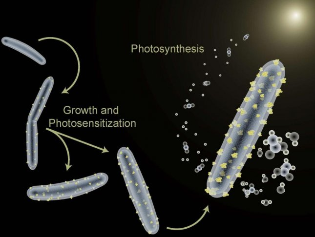 Researchers have trained a self-replicating bacterium to perform photosynthesis. Photo by Berkeley Lab