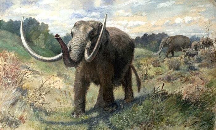 Artist's impression of North American mastodon.