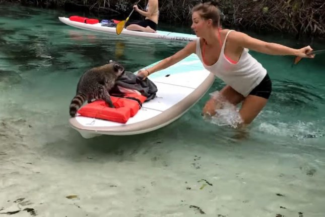 Janna Breslin fights a raccoon for ownership of her bag of food and clothing during a paddleboarding trip in Florida's Weeki Wachee Springs. Screenshot: JukinMedia