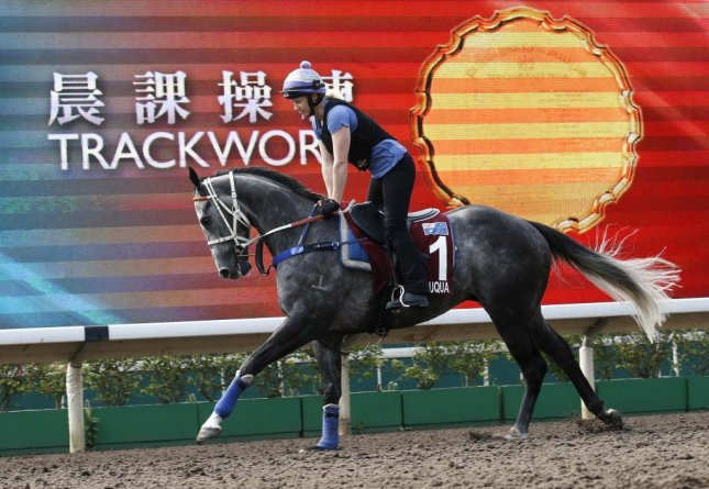 Australian sprinter Chautauqua gets in some late work on Thursday before Sunday's Group 1 Chairman's Sprint Prize at Sha Tin in Hong Kong. (HKJC photo)