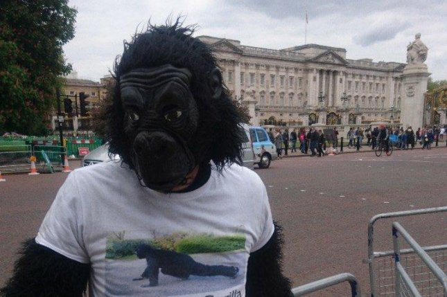 Tom Harrison, a 41-year-old police officer also known as Mr. Gorilla, crawled the entire London Marathon route to raise funds for The Gorilla Organization. His efforts brought in 26,000 pounds. Photo courtesy of Mr. Gorilla/Twitter