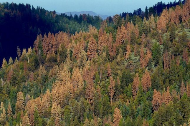 Climate change is to blame for a decline in seed production across western forests,where trees -- like the conifers ofCalifornia's Sequoia National Park -- tend to be bigger and older than trees in eastern forests. Photo byUSGS