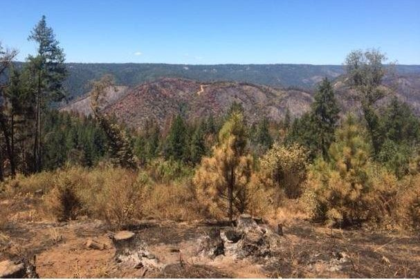 A man was arrested Friday for allegedly flying a drone over the Trailhead Fire that ignited near Foresthill, Calif., in late June. Photo courtesy of Cal Fire