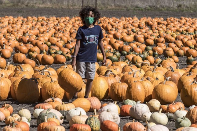 A masked attendee stands in a pumpkin patch in Half Moon Bay, Calif., on Monday. The city's Art & Pumpkin festival has been canceled this year due to the pandemic, but the annual Championship Pumpkin Weigh-off was held on private property. Photo by Terry Schmitt/UPI