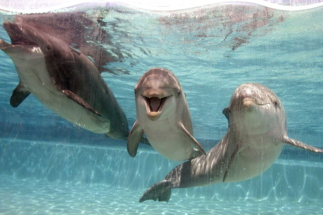 The change has drawn concerns from New Zealand's tourism industry that less interaction with the aquatic mammals will stymie business. File Photo by Ken James/UPI