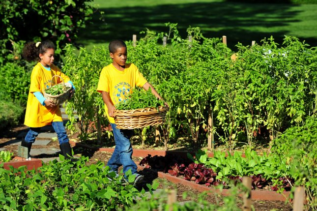 Students from Brancroft Elementary School students carry vegetables during the fall White House garden harvest with First Lady Michelle Obama in Washington on October 5, 2011. UPI/Kevin Dietsch